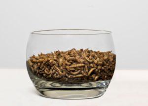 Larves d'insectes - Entosystem